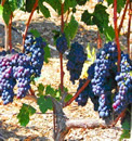 Livermore Wine Tours