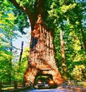Redwoods Tours